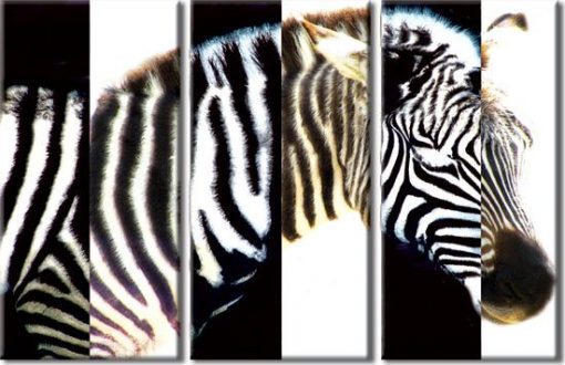 tryptyk zebra