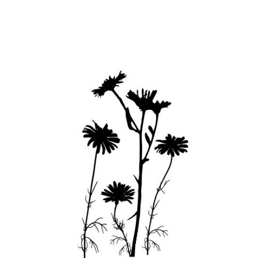 wzór kwiatków