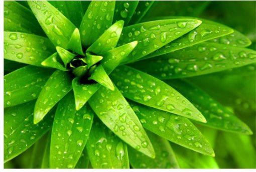 wzór roślinny