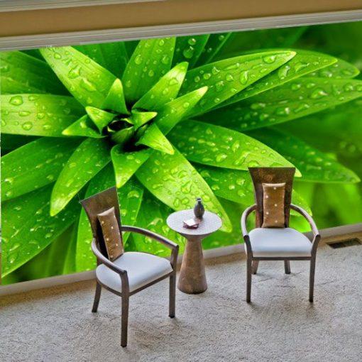 fototapeta roślina