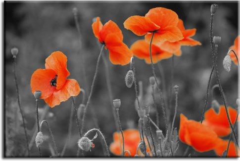 tapety pomarańczowe kwiaty