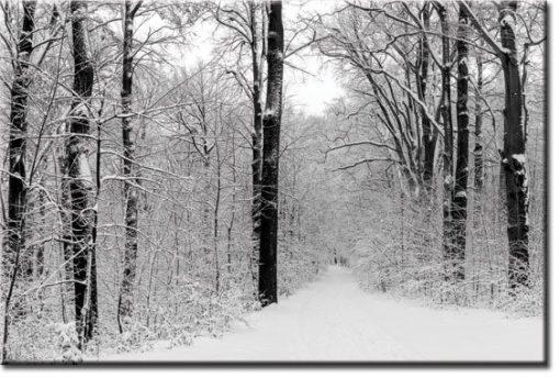 tapety z zimą