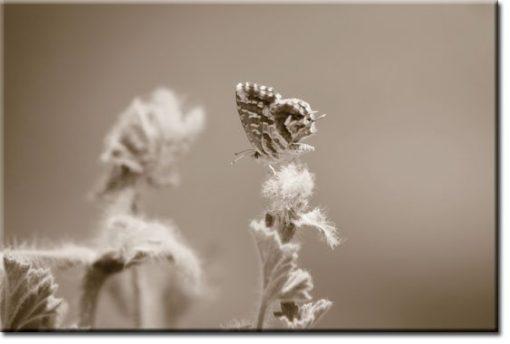 obraz z motylkiem