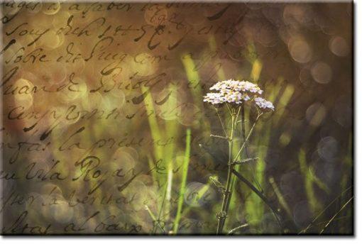 obrazy z łąką