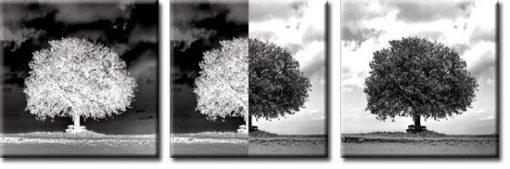 tryptyk z drzewami