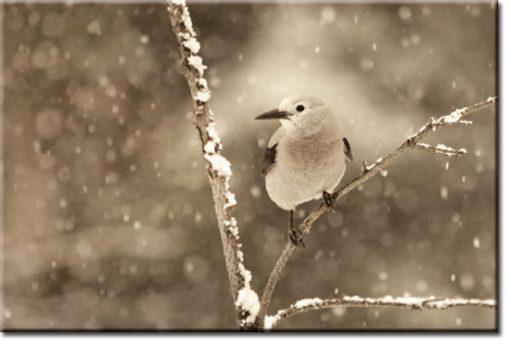 obrazy z ptaszkiem