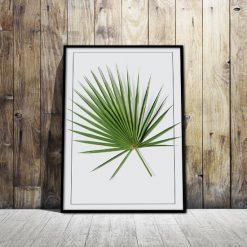 Plakat zielony liść paproci