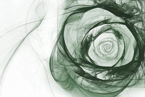 tapeta z dymną różą