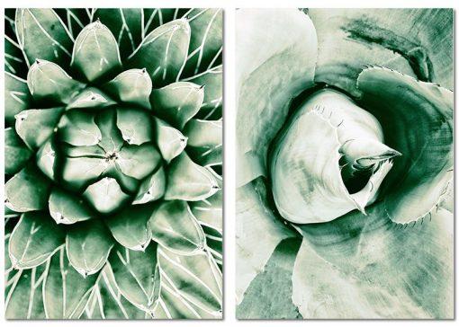 botaniczne obrazy