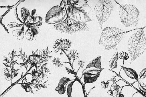tapety botaniczne