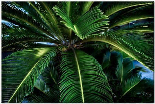 obraz z liściem palmy