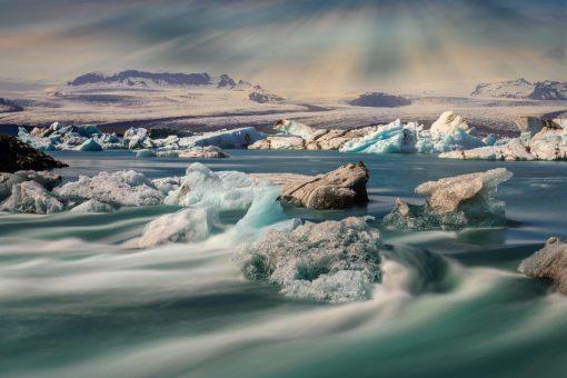 islandzki krajobraz z krami