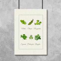 zielone roślinki jako przyprawy