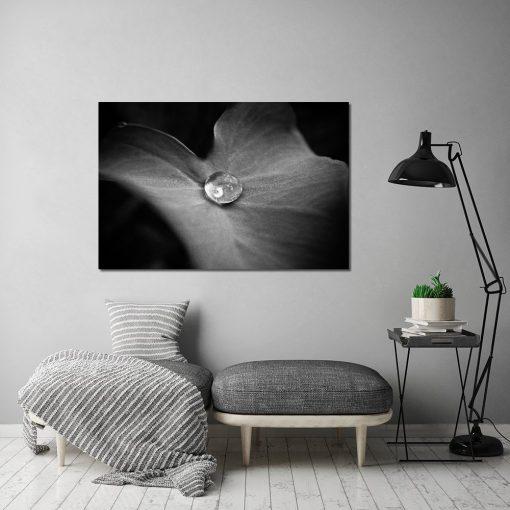 kropla wody na czarno-białym obrazie
