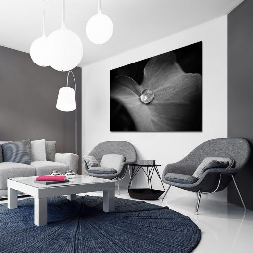 czarno-biały obraz z liściem