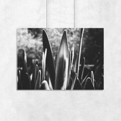 czarno-białe liście na plakacie