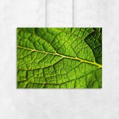zielony liść na plakacie