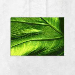 ścienny plakat z liściem