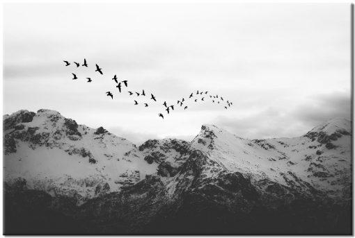 góry i ptaki jako obraz