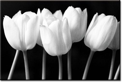 Czarno biały obraz z tulipanami do salonu