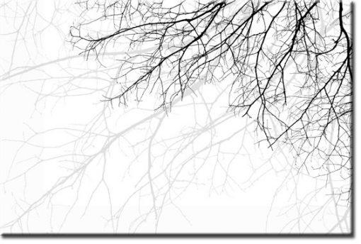 tapeta gałęzie
