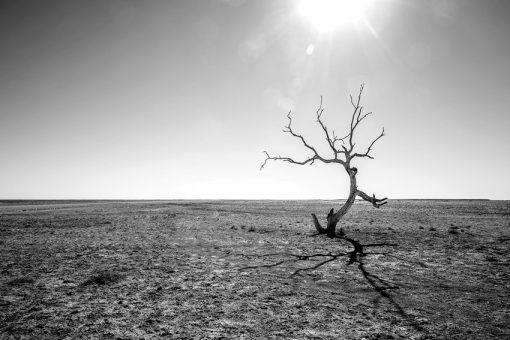 Fototapeta z motywem pustyni