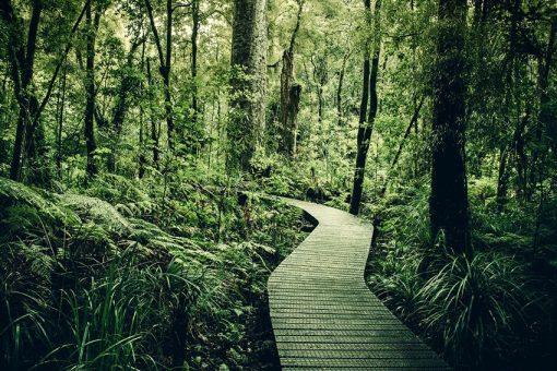 Fototapeta z leśną drogą