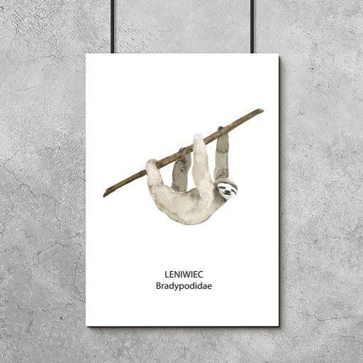 leniwiec pionowy