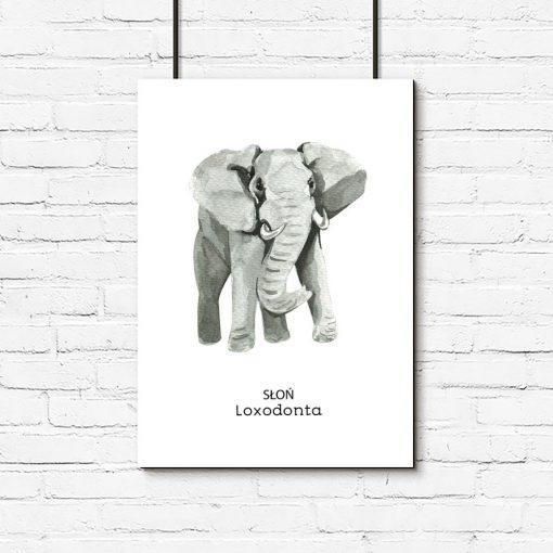 słoń na plakacie pionowym
