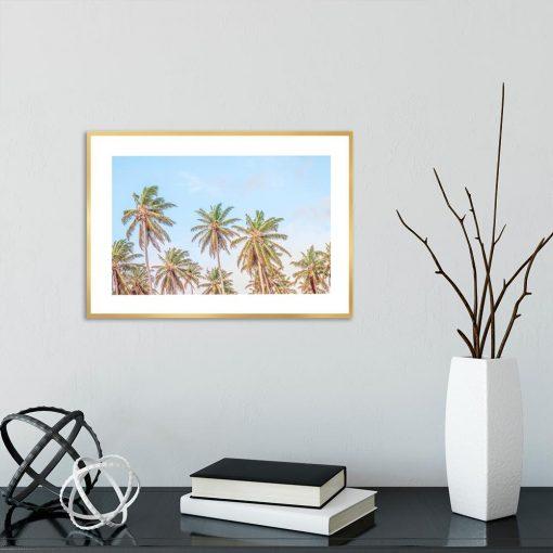 Plakat palmy