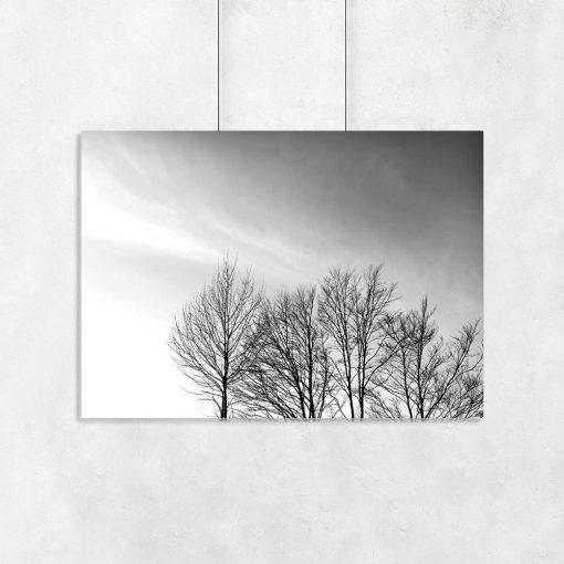 Plakat z motywem koron drzew