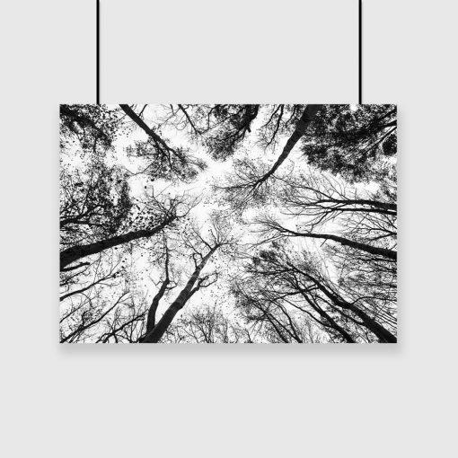 Plakat drzewa