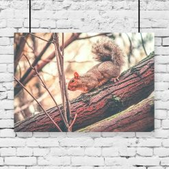 Plakat motyw wiewiórki