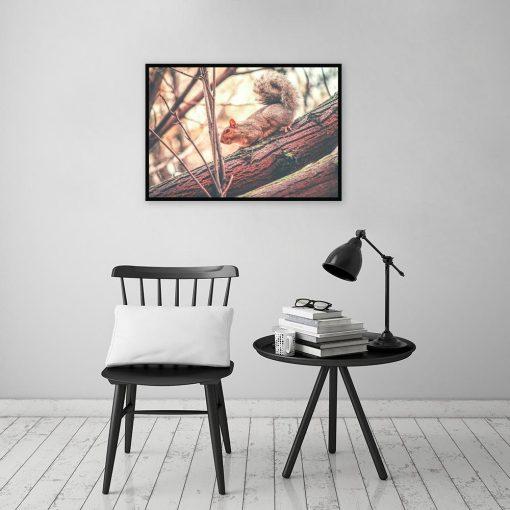 Plakat z motywem wiewiórki