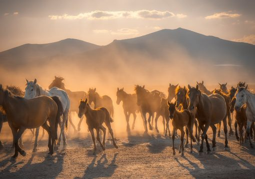 Tapeta stado koni