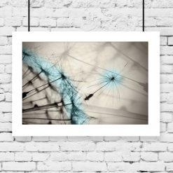 Plakat niebieski dmuchawiec