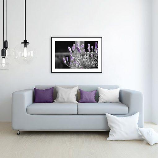 Plakat fioletowe pąki