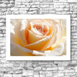 plakat z motywem róży na ścianę