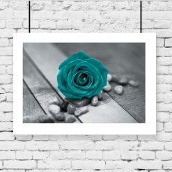 plakat z piękną różą na ścianę