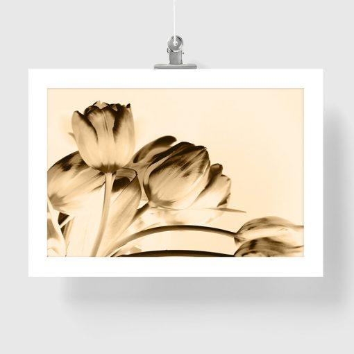 plakat tulipany do dekoracji ściany