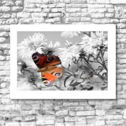 Plakat z motylkiem na ścianę