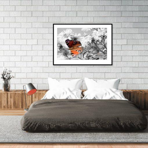 plakat motylek rusałka nad łóżko