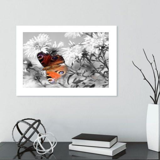 plakat motylek rusałka w salonie