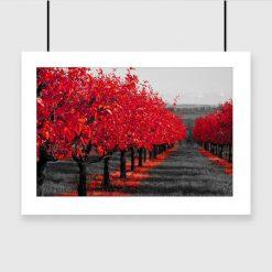 plakat czerwone drzewa na ścianę