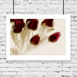plakat z tulipanami