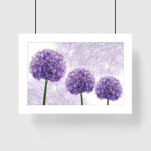 plakat kwiaty czosnkowe na ścianę