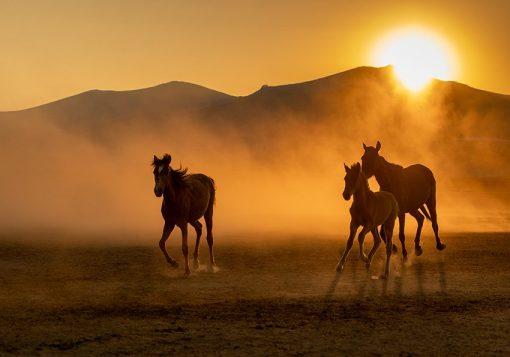 Fototapeta z końmi