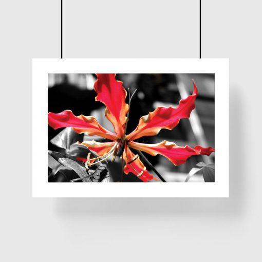 plakat z czerwonym kwiatem