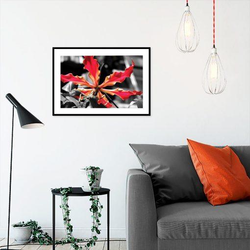 plakat cerwony kwiat na czarno-białym tle