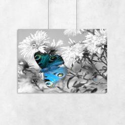 plakat z niebieskim motylem i kwiatami